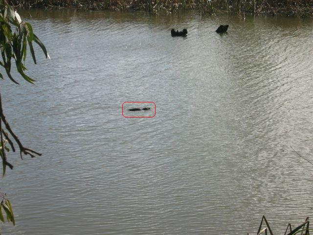 spottingplatypus2