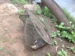 Platypus killed at Ipswich (QLD) 2013