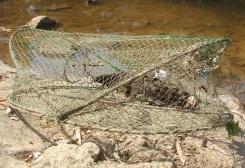 Female platypus killed in Yarra River (VIC) 2009