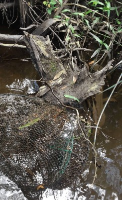Platypus killed in Yea River (VIC) 2017