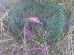 Two rakali killed in Sumsion Gardens Wodonga (VIC) 2012